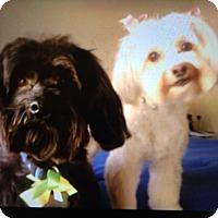 Adopt A Pet :: Nala and Romeo - St Louis, MO