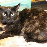 Adopt A Pet :: Jamaica - Rochester, MN