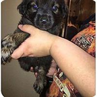 Adopt A Pet :: Wrigley - DeForest, WI