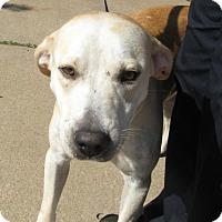 Adopt A Pet :: Arly - Stillwater, OK