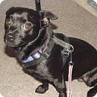 Adopt A Pet :: Ozzie - Sumter, SC