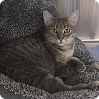 Adopt A Pet :: Candy - Fairfax, VA
