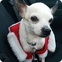 Adopt A Pet :: Mr. T - Oakland, FL