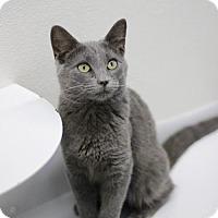 Adopt A Pet :: Ranger - Louisville, KY