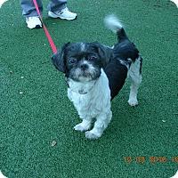 Adopt A Pet :: Patches - Morgan Hill, CA