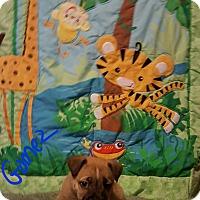 Adopt A Pet :: Gomez - Burlington, VT