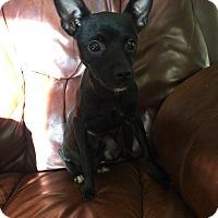 Adopt A Pet :: Benny~adopted! - Glastonbury, CT