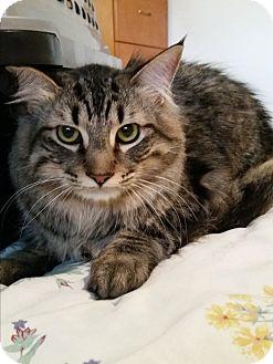 Cat Rescue Modesto Ca