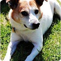 Adopt A Pet :: Benny - Omaha, NE