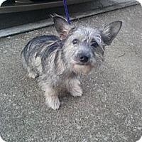 Adopt A Pet :: Murphy - Alexandria, VA