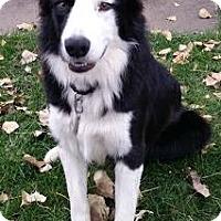Adopt A Pet :: Rhys - Bellevue, NE