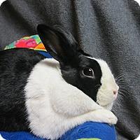Adopt A Pet :: Rayna - Newport, DE