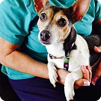 Adopt A Pet :: Lexie in San Antonio - San Antonio, TX