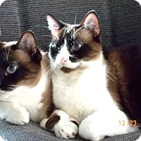Adopt A Pet :: Bandit and Coco - Davis, CA