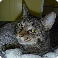 Adopt A Pet :: Avalon - Hamburg, NY