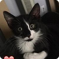 Adopt A Pet :: Slash - River Edge, NJ