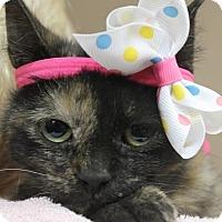 Adopt A Pet :: PEARL - Clayton, NJ
