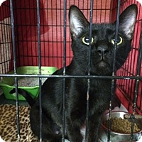 Adopt A Pet :: Varessa - Byron Center, MI