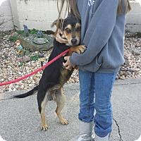 Adopt A Pet :: Sparky - Fayette City, PA