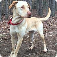 Adopt A Pet :: Aubrey - Brattleboro, VT