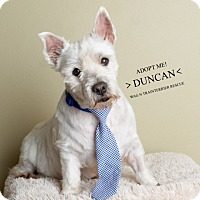 Adopt A Pet :: Duncan-Pending Adoption - Omaha, NE