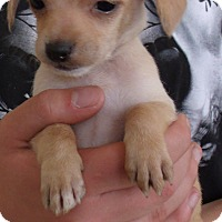Adopt A Pet :: MEGAN - Corona, CA