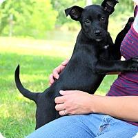 Adopt A Pet :: Meeko - Glastonbury, CT