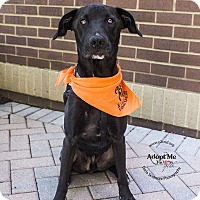 Adopt A Pet :: Gage - Mooresville, NC