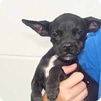 Adopt A Pet :: Cal - Oviedo, FL