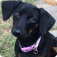 Adopt A Pet :: Felicity Fuji - Houston, TX