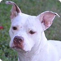 Adopt A Pet :: Dixie - Englewood, FL