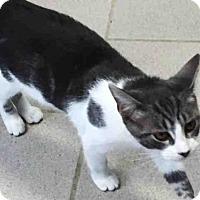 Adopt A Pet :: KOKI - Canfield, OH