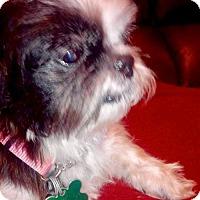 Adopt A Pet :: Natalie Gulbis 'Pepper' - Euless, TX