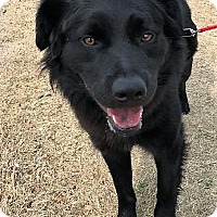 Adopt A Pet :: Lucky - Wichita Falls, TX
