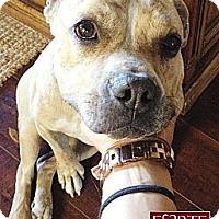 Adopt A Pet :: Karma - Marina del Rey, CA