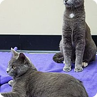 Adopt A Pet :: Harry & Walter - Chicago, IL