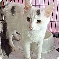 Adopt A Pet :: Bogart - Escondido, CA