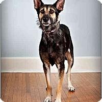 Adopt A Pet :: Nealy - Owensboro, KY