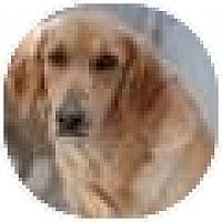 Adopt A Pet :: Leslie - Denver, CO
