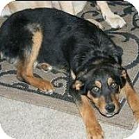 Adopt A Pet :: Roscoe - Austin, TX