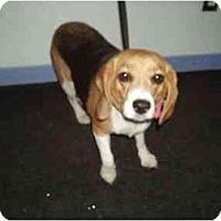 Adopt A Pet :: Rosy Bea - Phoenix, AZ