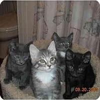 Adopt A Pet :: HospiceKittens - Riverside, RI