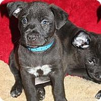 Adopt A Pet :: FENWAY - Loxahatchee, FL