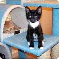 Adopt A Pet :: Teardrop - Alexandria, VA
