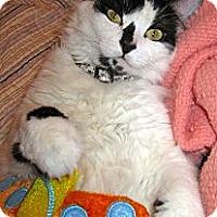 Adopt A Pet :: Mama Bear - Lafayette, CA