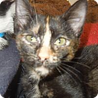 Adopt A Pet :: Natalie - Medina, OH