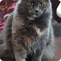 Adopt A Pet :: Snickerdoodle - St. Louis, MO