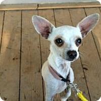 Adopt A Pet :: Rico - Santa Ana, CA