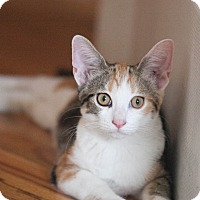 Adopt A Pet :: Emma - Chicago, IL