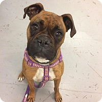Adopt A Pet :: Shelia - Reno, NV